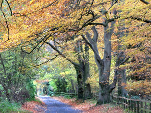 Stockbridge Autumn Lane